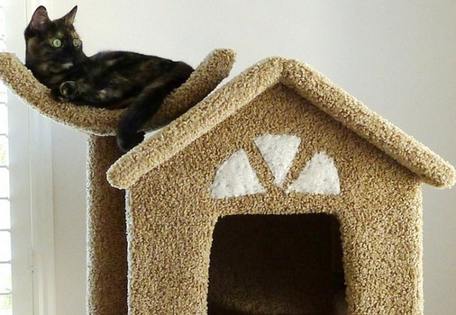 molly and friends cat tree review featured