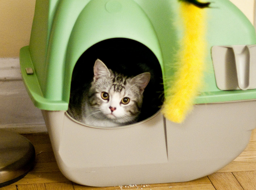 Cheap self cleaning litter box