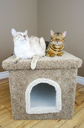 jumbo cat litter enclosure new cat condos review